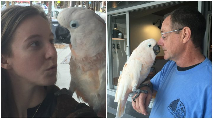 Petaluma Parrot